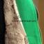 เสื้อโค้ท ผ้าวูลเกรดดี งานนำเข้าเกรดพรีเมี่ยม สีเขียวมิ้นท์ thumbnail 7